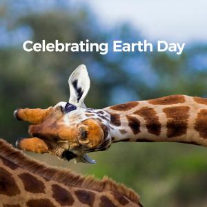 Image of giraffe bending over with words that reads Celebrating Earth Day